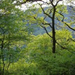 guided walks wales
