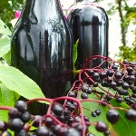 Elderberry remedy
