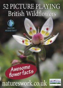 British wildflowers playing cards