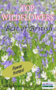 Top Wildflower trumps