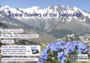 alpine flowers of the Swiss Alps