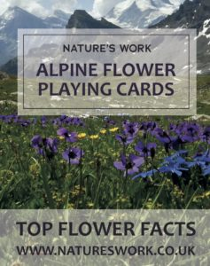 alpine flower playing cards