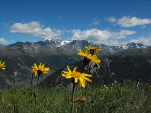 The Origins of Alpine Flowers