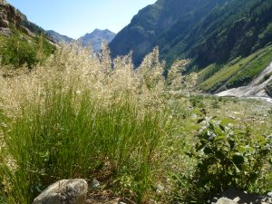 The sex life of alpine flowers