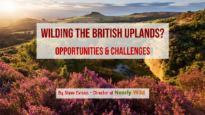 Wilding the British uplands?